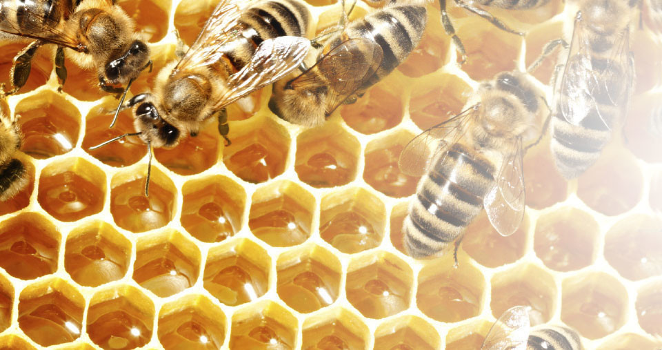 home-header-bees_01